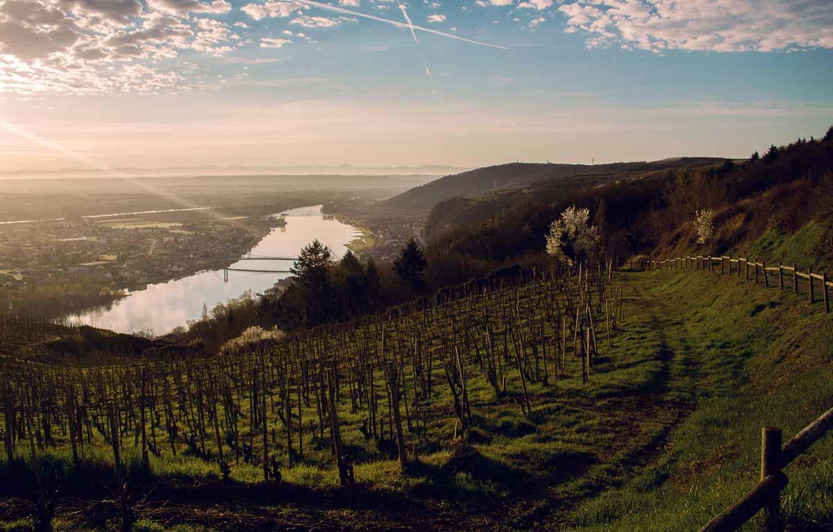 Paysage eepuis les hauteurs, au dessus des vignes, vue sur serrières et sablons © Kevin Amiel